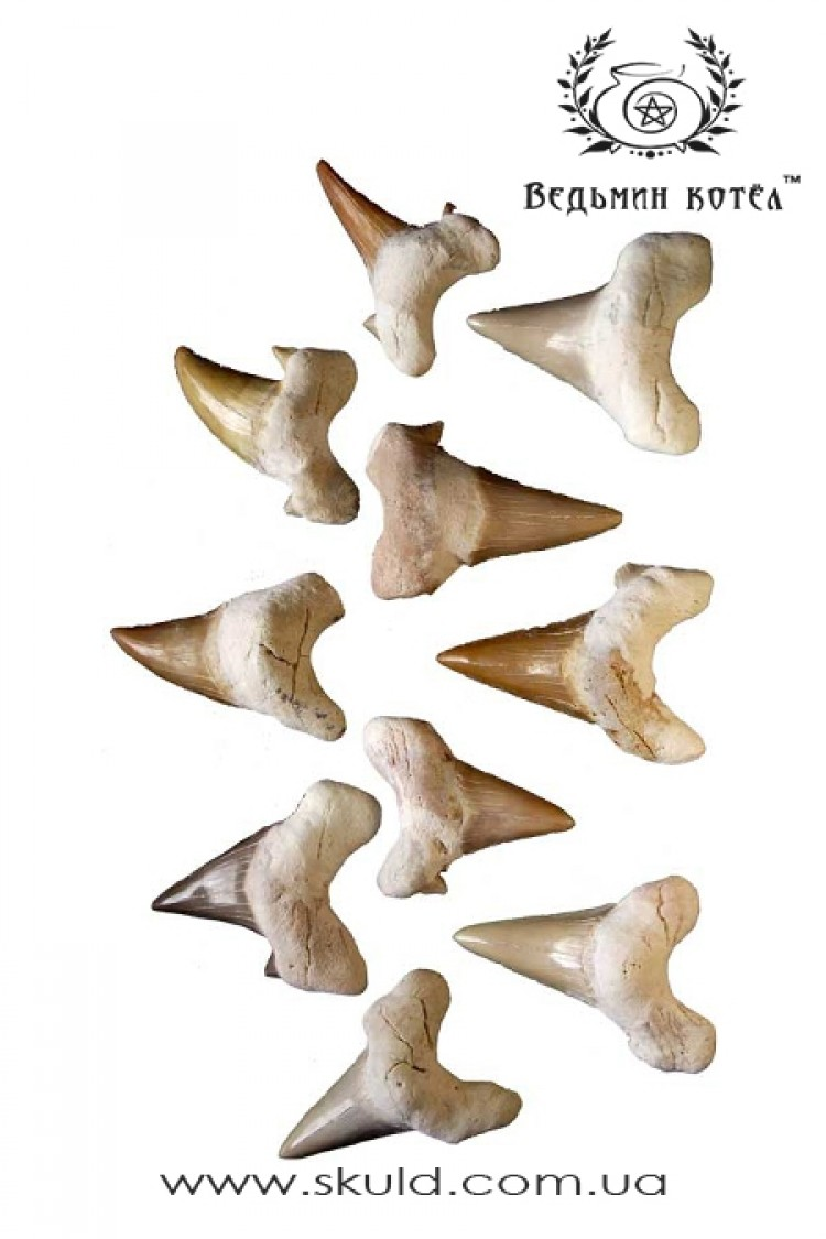 Акулий зуб